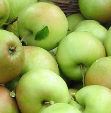 BOMMERT Apfelkorb